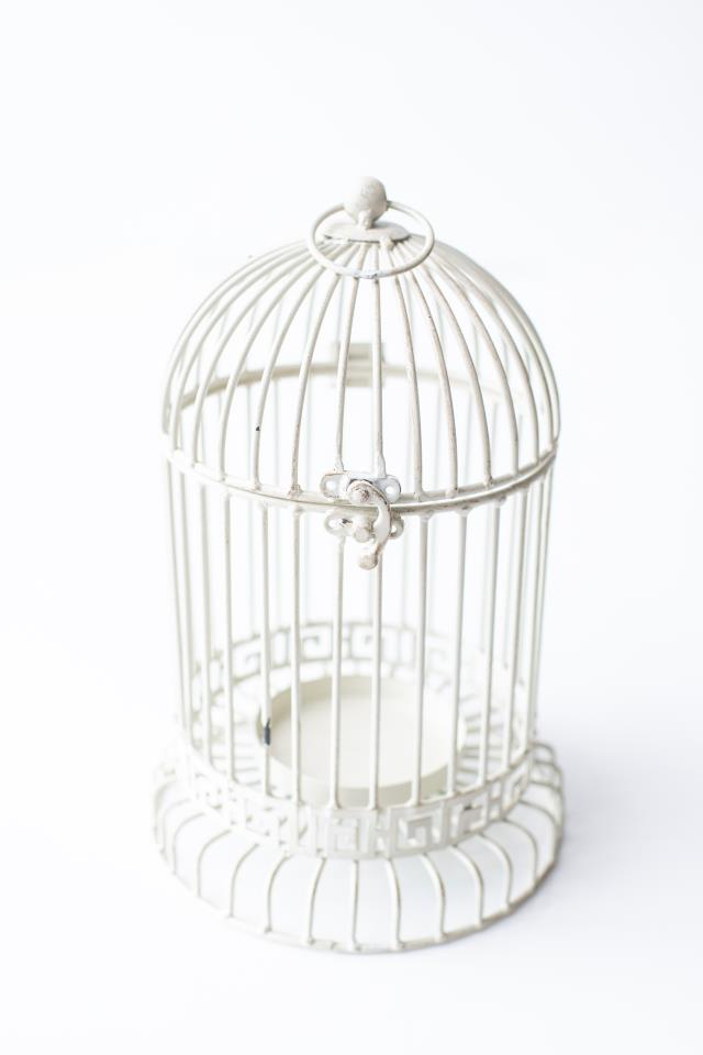 Where to find 12 X7  ANTIQUE WHITE METAL BIRDCAGE in Tyler